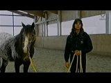 NX работа с подготовленной лошадью1,серия 2